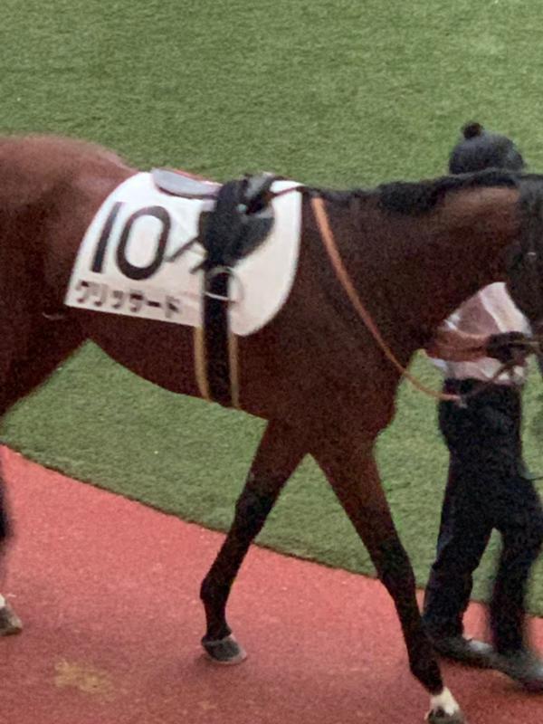 2019/06/15 JRA(日本中央競馬会) 競走成績