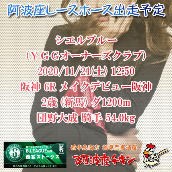 2020年11月21日 阿波座レースホース出走予定(シエルブルー)