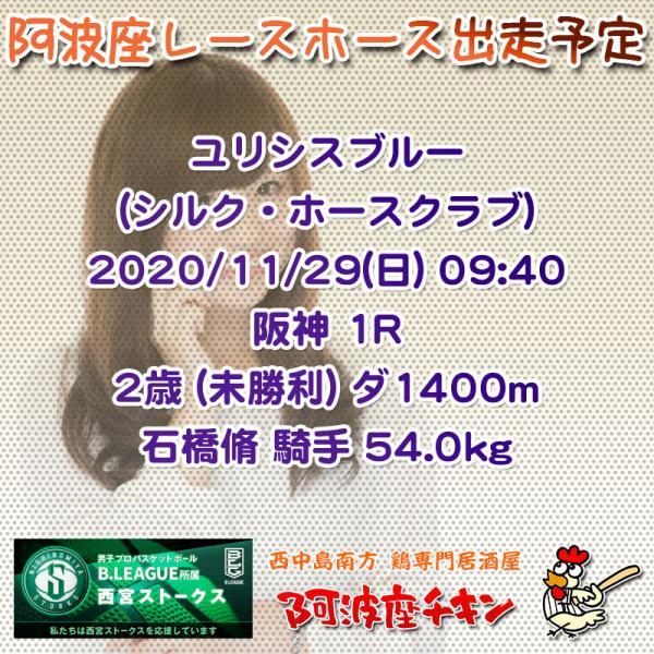 2020年11月29日 阿波座レースホース出走予定(ユリシスブルー)